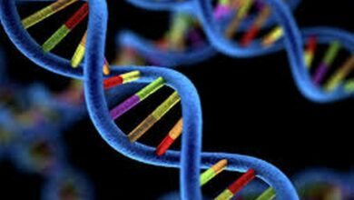 Photo of Study identifies 27 genetic variants associated with disease in multiethnic genome