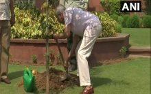 Jaishankar, Muraleedharan plant saplings to mark World Environment Day