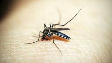 Photo of Climate warming may increase malaria risk in colder areas
