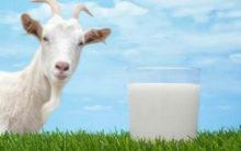 Goat milk formula can be good for infant gut health