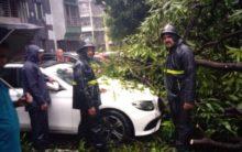 Thane: Trees fall on car in Raheja Garden, no casualties
