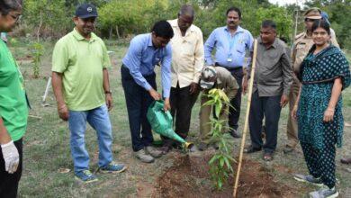Photo of Plantation Initiative at Zoo Park