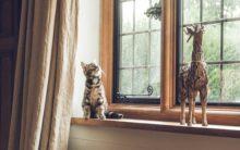 Gujarati couple struggles to find missing cat lost in Andhra Pradesh