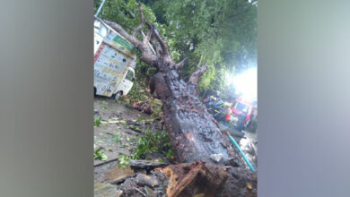 Photo of Tree falls damaging apartment building, 3 vehicles in Thane