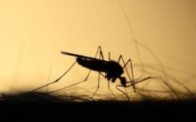 Dengue fever kills 13 in Tanzania