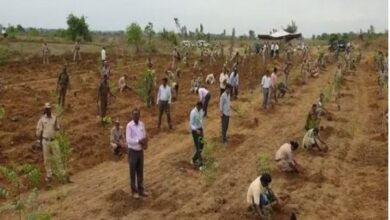 Photo of Asifabad: Forest Range officers plant saplings to protest against TRS attack