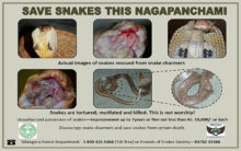 Forest wing joins NGO to curb violence against snakes