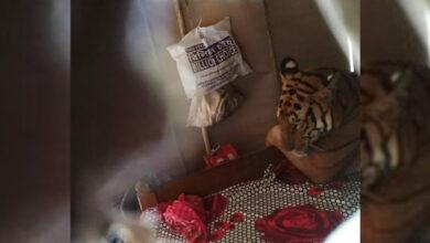 Photo of Assam: As floods wreak havoc, Tiger relax in Rafikul's bed