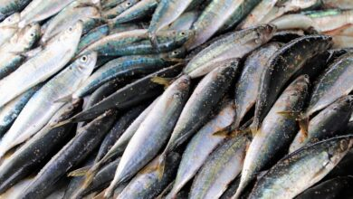 Photo of J&K produces 20,000 tonnes of fish annually