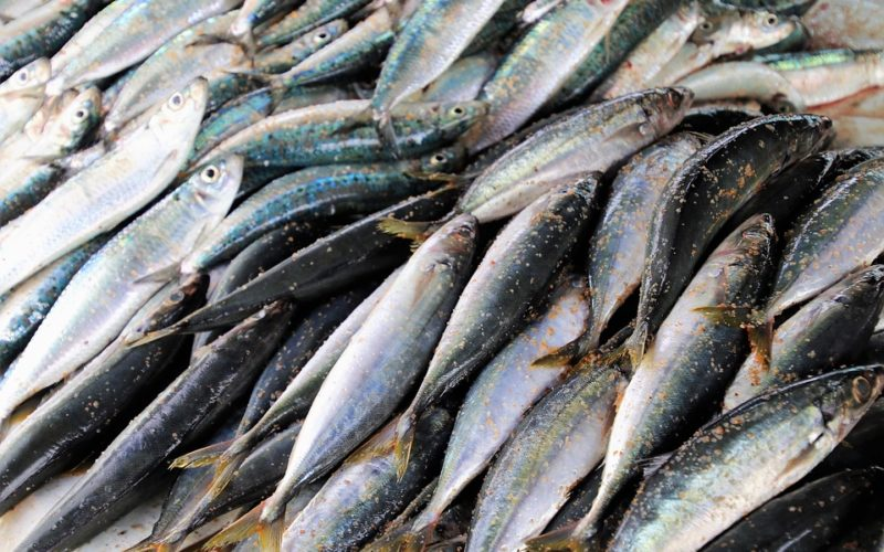 Indias Marine Fish Production Down By 9 As Sardine Catch Drops