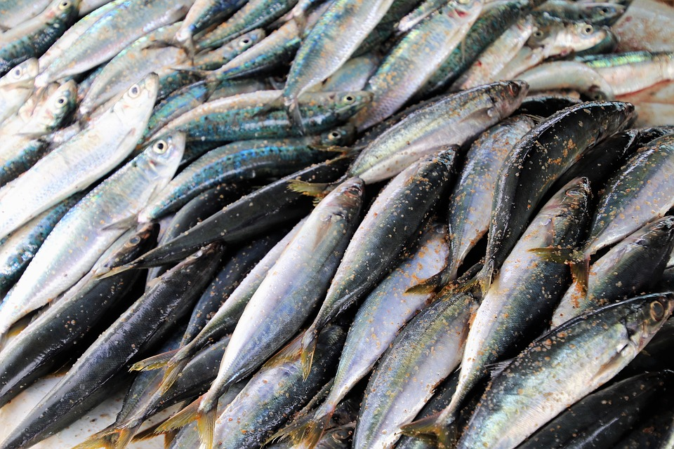 J&K produces 20,000 tonnes of fish annually