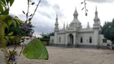 Photo of Common emigrant butterfly fluttering near Spanish Mosque