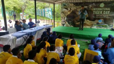 Photo of Global Tiger Day celebrated at KBR Park