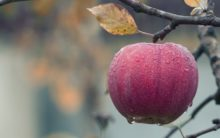 Apple: Here're the health benefits of the fruit