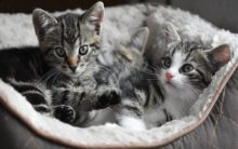 Cats continue to put on weight as they age: Study