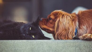 Photo of Most dog, cat owners unaware of pet blood donation schemes: Study
