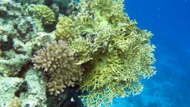 Photo of Some corals can survive in acidified ocean conditions