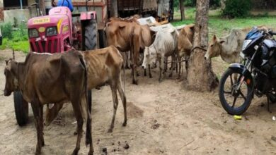Photo of Police nab cow smugglers in Andhra Pradesh
