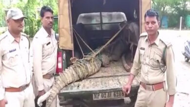 Photo of Damoh: Crocodile enters residential area due to heavy rain, rescued