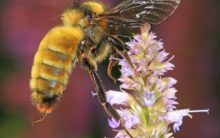 Telangana school students attacked by bees, 1 student critical