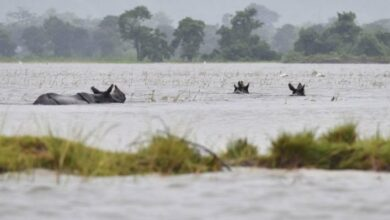 Photo of Flood-Hit, Assam suffers rare rhinos in Kaziranga Park at risk