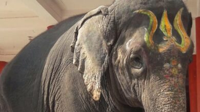 Photo of Bonalu to be taken on Karnataka elephant 'Gaja Lakshmi'