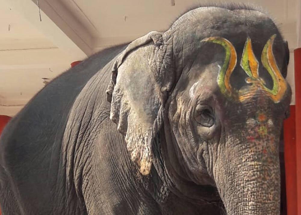 Bonalu to be taken on Karnataka elephant 'Gaja Lakshmi'
