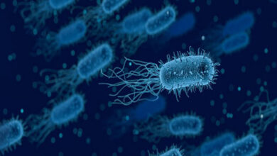 Photo of Wake up sleeping bacteria to fight infections:Study