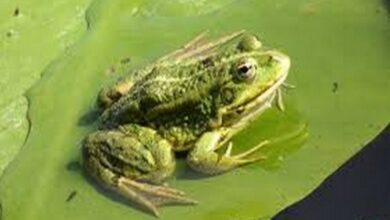 Photo of Researchers identify new frog species