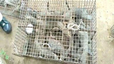 Photo of Krishna: Forest dept recovers 50 iguanas