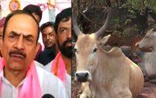 Mahmood Ali urges Muslims to avoid cow slaughter on Bakrid