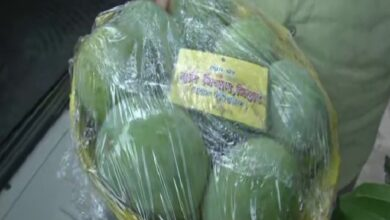 Photo of Bihar: Nitish govt distributes mangoes to MLAs, faces flak from RJD