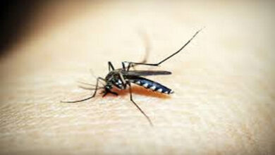 Photo of Study says anaemia may contribute to the spread of dengue