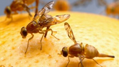 Photo of Insects feel persistent pain after injury: study