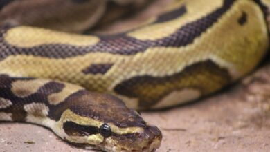 Photo of Snake creates panic in Agra shoe factory