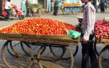 High prices make tomato the 'forbidden veggie'