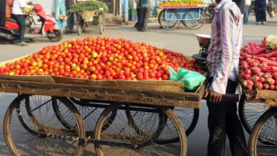 Photo of High prices make tomato the 'forbidden veggie'