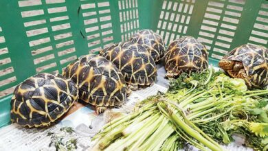Photo of Boost to wildlife preservation of Indian star tortoise