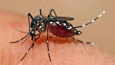 Photo of Can't control dengue, pay Rs 50 lakh: Telangana HC