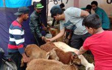 Livestock Market  for Bakrid