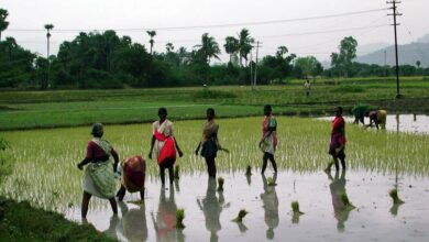 Photo of Lag in Kharif sowing raise concerns for Agri growth