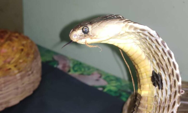 Forest officials, NOGs rescue snakes in Hyderabad