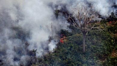 Photo of Amazon: Why is part of the forest burning?