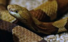 Snake scare in UP jail, 1 dead