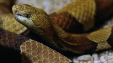 Photo of Snake scare in UP jail, 1 dead