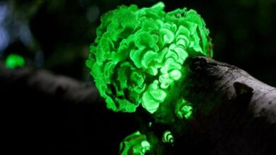Photo of Fluorescent glow may reveal hidden life in the cosmos: Study