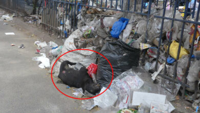 Photo of GHMC staff neglect garbage removal at Charminar Road