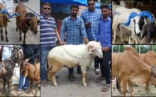 Hyderabad flooded with sheep, Goats for Bakrid