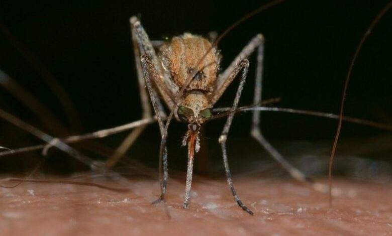 Mosquito-borne diseases on the rise