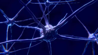Photo of Researchers find new drug to prevent neuronal deaths